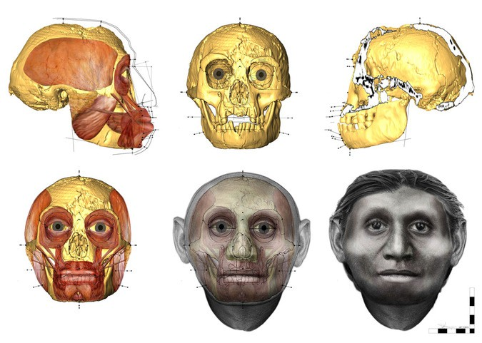 Homo-floresiensis-teeth